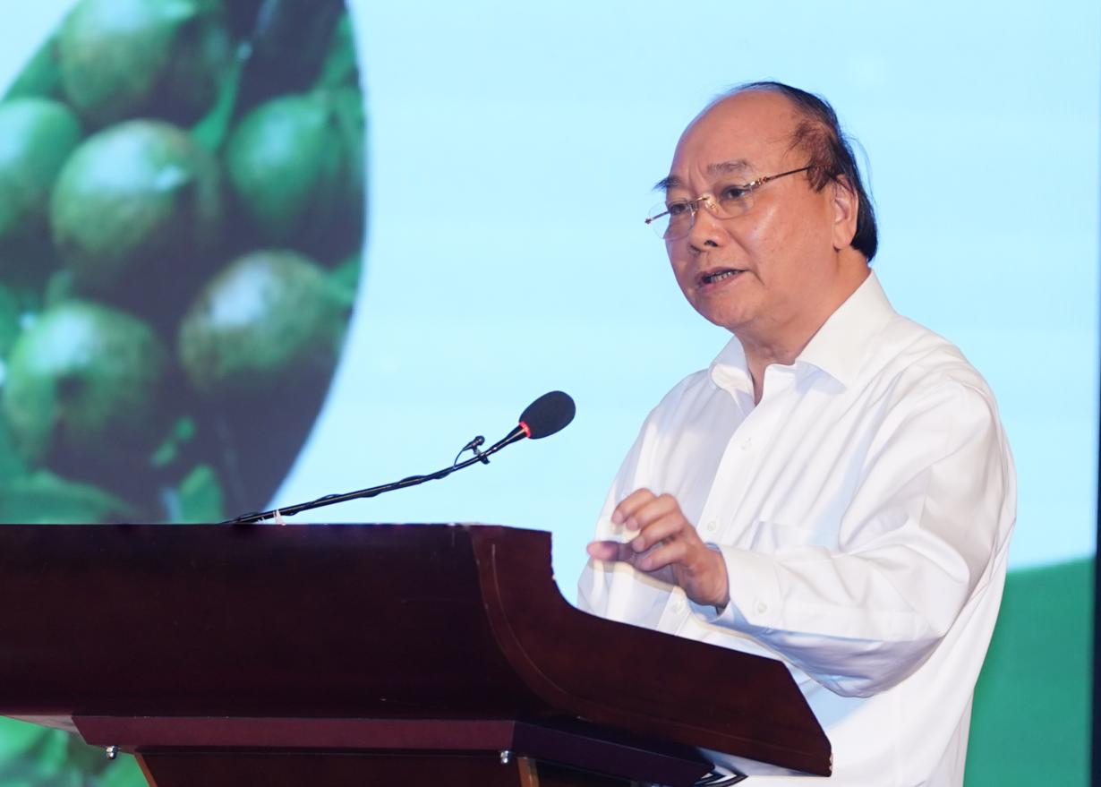 THỜI SỰ 18H CHIỀU 29/9/2020: Thủ tướng Nguyễn Xuân Phúc yêu cầu xác định rõ định hướng cho cây mắc ca.