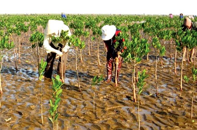 Tạo sinh kế bền vững trước tác động của biến đổi khí hậu (6/1/2021)