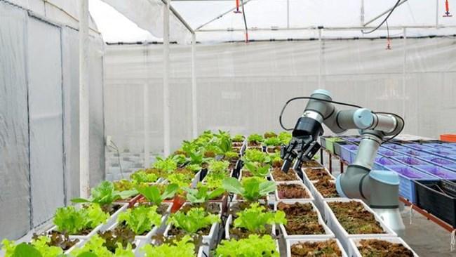 Hàn Quốc ứng dụng công nghệ trí tuệ nhân tạo vào sản xuất nhằm vực dậy ngành nông nghiệp (3/1/2021)
