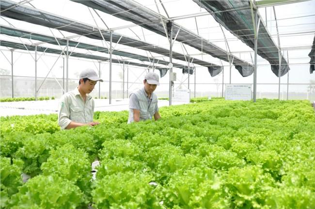 """""""Liên kết chuỗi giá trị nông sản sạch"""" (21/01/2021)"""