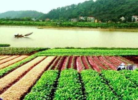 Các mô hình kinh tế hợp tác Hà Nam: Đóng góp tích cực trong xây dựng nông thôn mới (16/10/2020)