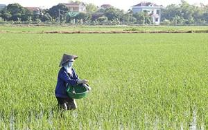 Bình Định: Tập trung trị rầy nâu, rầy lưng trắng trên lúa đông xuân (12/04/2021)