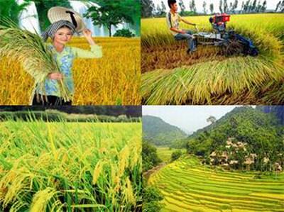 Bạn bè với Việt Nam ngày 02/3/2015: Việt Nam – Hàn Quốc tăng cường hợp tác trong lĩnh vực nông nghiệp