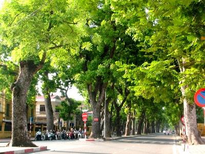 Việt Nam trong tuần ngày 28/3/2015: Bài học về ứng xử với cây và quy hoạch cây xanh ở các đô thị