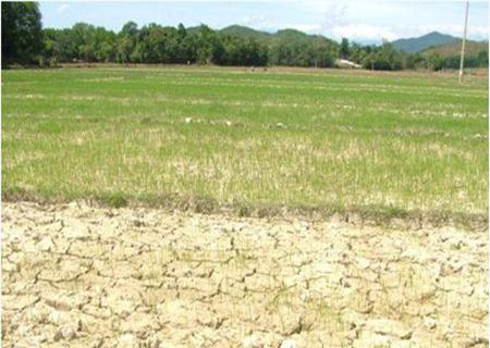 Thời sự sáng ngày 11/4/2015: Tổng cục Thủy lợi đề xuất phương án đối phó với tình trạng hạn hán và nước mặn xâm nhập tại khu vực Đồng bằng sông Cửu Long