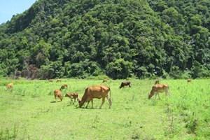 Mô hình quản lý nào để đất các nông, lâm trường được sử dụng đúng mục đích.