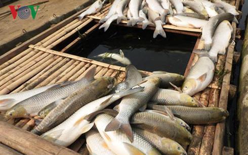 Công an tỉnh Thanh Hóa đang phối hợp các Ban ngành chức năng tỉnh Hòa Bình điều tra, hoàn thiện hồ sơ để khởi tố vụ án hình sự gây ô nhiễm sông Bưởi (Thời sự trưa 9/5/2016)