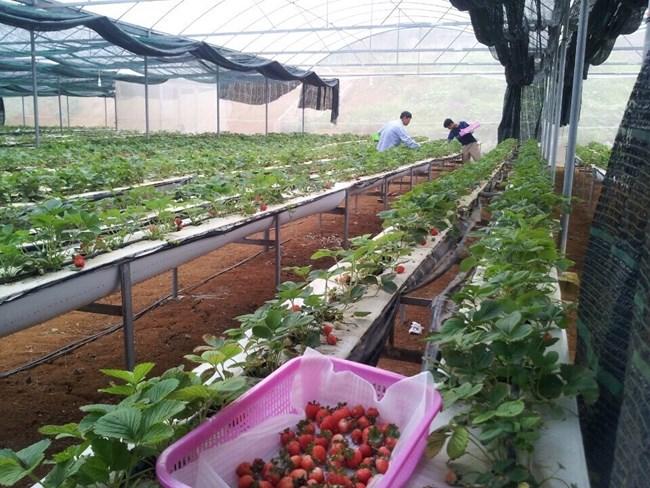 Sơn La đẩy mạnh xuất khẩu nông sản (22/2/2018)