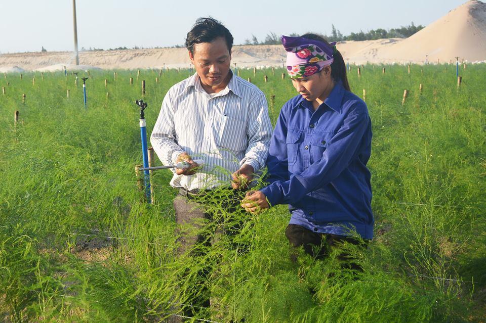 Nông nghiệp và nông thôn ngày 25/12/2014: Cánh đồng trên cát hoang hóa - Thành công trong sản xuất nông nghiệp của tỉnh Hà Tĩnh