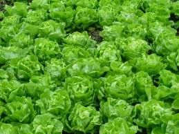 Thời sự trưa ngày 08/10/2014: Rau quả Việt Nam nhiễm khuẩn và có nguy cơ bị cấm nhập khẩu vào thị trường Châu Âu
