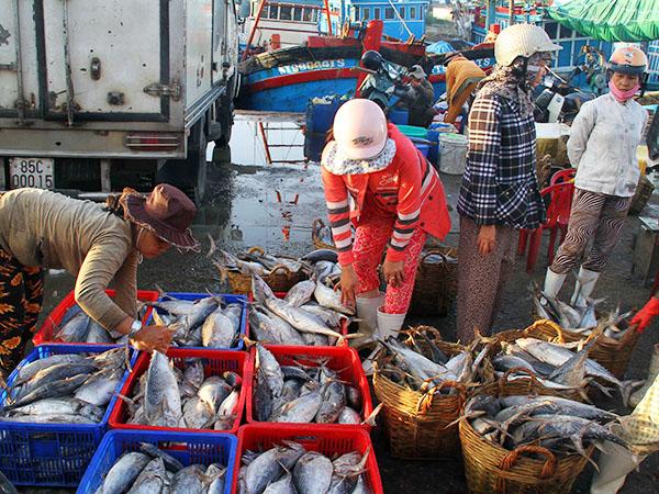 Biển đảo Việt Nam ngày 11/8/2014: Giá xăng dầu tăng, giá bán hải sản giảm khiến ngư dân gặp nhiều khó khăn