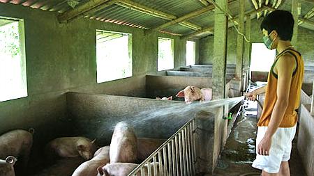 Tỉnh Nam Định tích cực chuyển đổi cây trồng vật nuôi