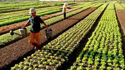Nông nghiệp và nông thôn ngày 12/01/2015: Giật mình thói quen dùng thuốc bảo vệ thực vật của nông dân