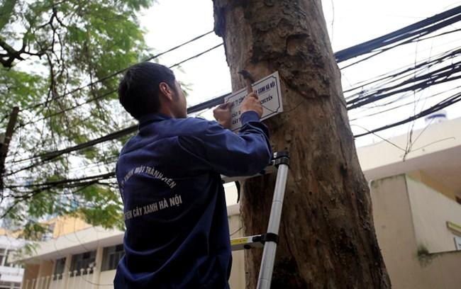 Thời sự sáng ngày 20/3/2015: Hà Nội chính thức treo biển trưng cầu ý kiến người dân về việc thay thế cây trên các tuyến phố.
