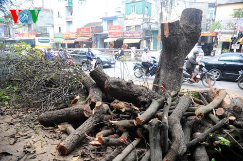 Thời sự trưa ngày 22/3/2015: Đã có đơn vị đầu tiên công bố công khai về việc chặt cây và quy trình xử lý những cây đã bị đốn hạ theo yêu cầu của thành phố.