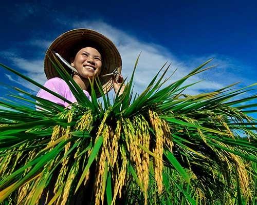 Khơi dậy sức mạnh nông dân.