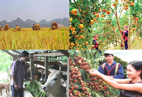 Phòng ngừa thời tiết cực đoan: Đâu là giải pháp để thúc đẩy nông nghiệp Việt Nam phát triển (6/12/2016)