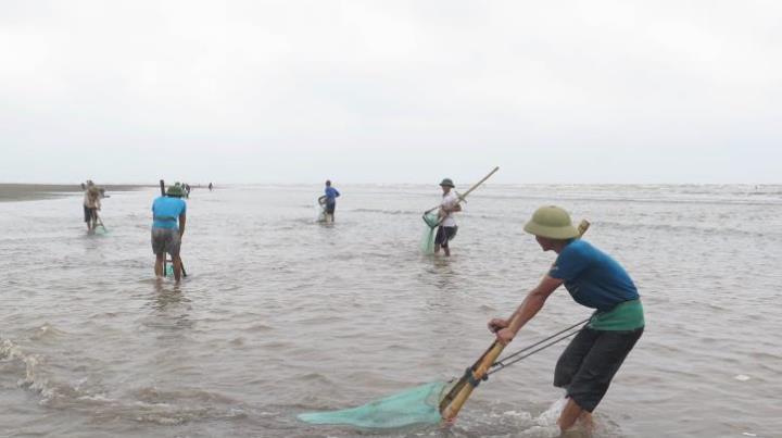 Thái Bình ngăn chặn, xử lý việc đưa thông tin không chính xác về hải sản chết tại bãi biển Cồn Vành (Thời sự chiều 11/5/2016)