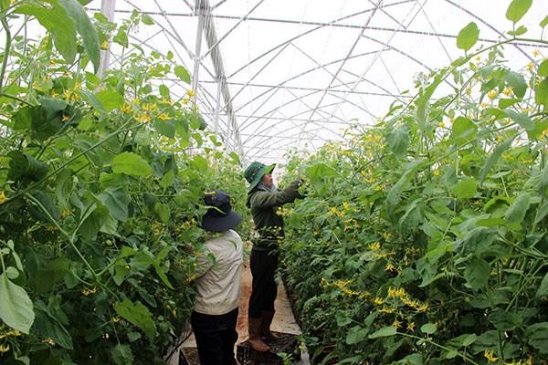 Lâm Đồng: Kinh nghiệm huy động vốn cho nông nghiệp công nghệ cao (25/3/2017)