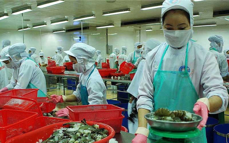 Giải pháp nào để ngành tôm Việt Nam phát triển bền vững? (04/6/2017)