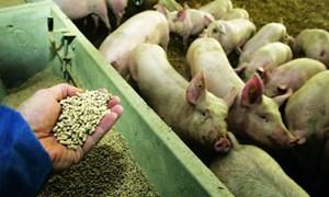 Hướng đến không sử dụng kháng sinh trong chăn nuôi (17/8/2017)