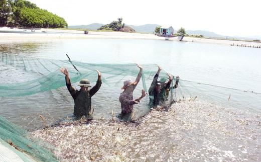 Trách nhiệm, nhận thức của ngư dân trong khai thác, nuôi trồng và bảo vệ nguồn lợi thủy sản để phát triển bền vững. (18/8/2017)