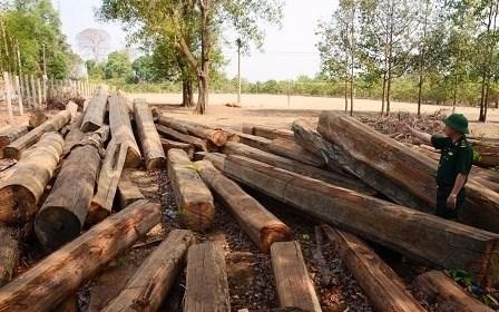 Nóng buôn lậu gỗ, gian lận xăng dầu, phân bón thuốc bảo vệ giả tại Tây Nguyên  (10/01/2018)