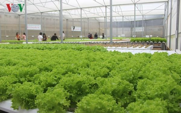 Người có niềm đam mê với nông nghiệp công nghệ cao (8/10/2018)