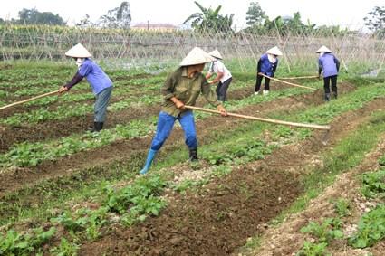 Huyện Việt Yên, tỉnh Bắc Giang- tích tụ ruộng đất, tăng hiệu quả sản xuất  (09/03/2018)