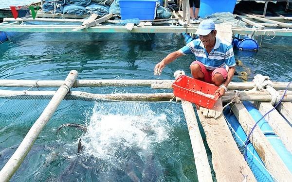 Để phát triển nuôi cá lồng xứng với tiềm năng (12/3/2018)