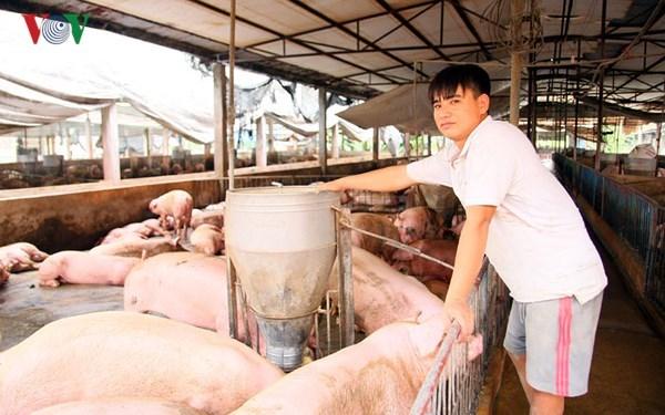 Giá lợn tăng trở lại, người chăn nuôi cũng không mặn mà tái đàn (27/4/2018)