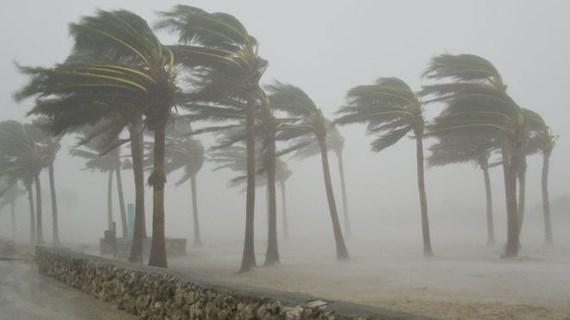 Dự đoán năm nay nước ta có trên 12 cơn bão và áp thấp nhiệt đới, trong đó khoảng 4-6 cơn bão ảnh hưởng trực tiếp đến khu vực Bắc Bộ (Thời sự đêm 30/5/2018)