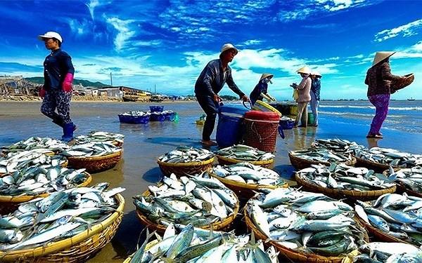 Giải pháp khắc phục những khó khăn trong việc truy xuất nguồn gốc hải sản (31/7/2018)