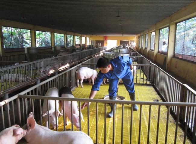 Áp dụng tiến bộ kỹ thuật trong chăn nuôi giúp nâng cao giá trị sản phẩm (26/8/2018)