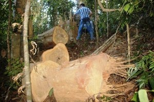 Lại điệp khúc đùn đẩy trách nhiệm sau khi vụ phá rừng qui mô lớn tại xã Vĩnh Sơn, huyện miền núi Vĩnh Thạnh tỉnh Bình Định được phát hiện (10/8/2018)