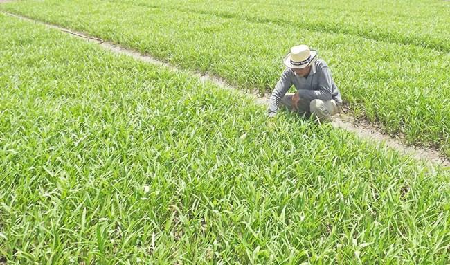 Hợp tác xã kiểu mới - xu hướng tất yếu của nền nông nghiệp hiện đại (23/8/2018)