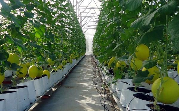 Hà Nội tập trung phát triển nông nghiệp công nghệ cao theo chuỗi giá trị (5/8/2018)