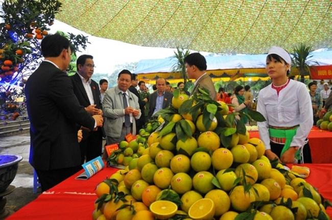 Phát triển cây ăn quả có múi tại các tỉnh Bắc Trung Bộ (21/11/2019)