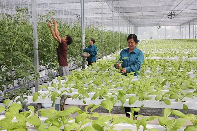 """Loạt bài """"Tạo động lực mới cho hợp tác xã nông nghiệp phát triển"""". Bài 1:"""
