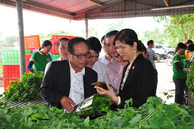 Vĩnh Phúc: Phát triển sản phẩm nông nghiệp phục vụ ngành du lịch (22/11/2019)
