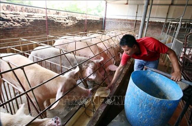 Chăn nuôi nhỏ lẻ - Hướng đi nào để đảm bảo phát triển bền vững? (19/12/2019)