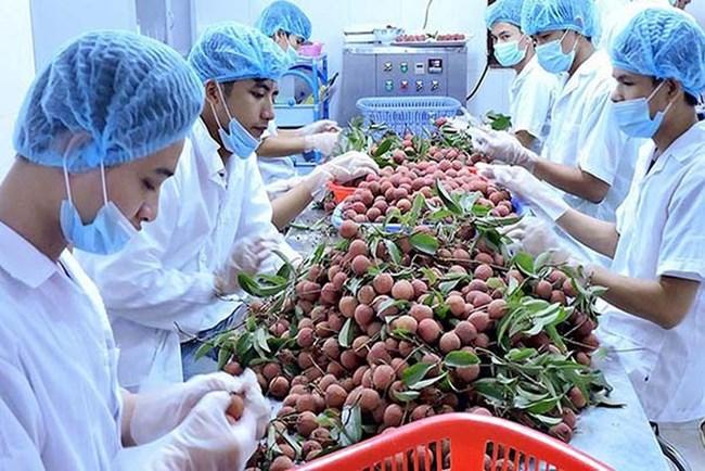 Thêm nhiều rào cản kỹ thuật khi xuất khẩu nông sản sang Trung Quốc (4/3/2019)
