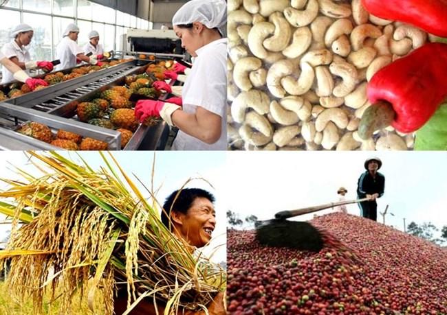 Giải pháp xuất khẩu nông sản hiệu quả (12/4/2019)