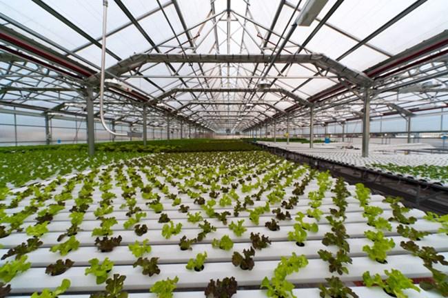 Phát triển doanh nghiệp công nghệ trong lĩnh vực nông nghiệp (11/5/2019)