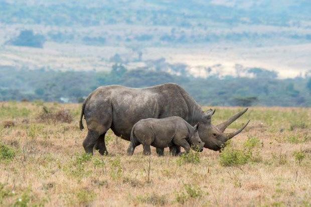 Sắp phát hành trái phiếu bảo vệ động vật đầu tiên trên thế giới (19/7/219)