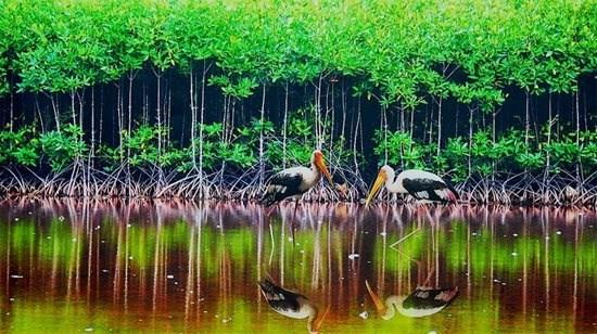 Bảo vệ đa dạng sinh học trước tác động của biến đổi khí hậu (2/1/2020)