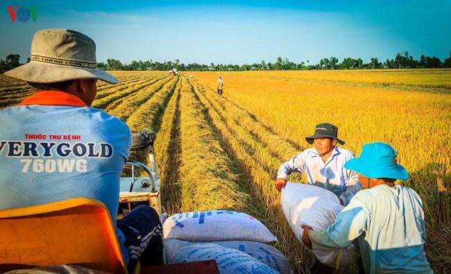 """""""Đẩy mạnh liên kết sản xuất, phát triển HTX nông nghiệp trong bối cảnh hội nhập"""""""