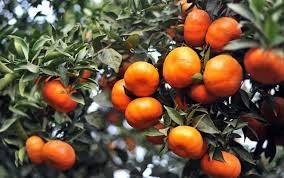 Khi mưa dông về bản & Hồi sinh cho cánh đồng cam (21/11/2020)