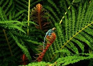 Bảo tồn đa dạng sinh học trước những tác động của biến đổi khí hậu (09/12/2020)