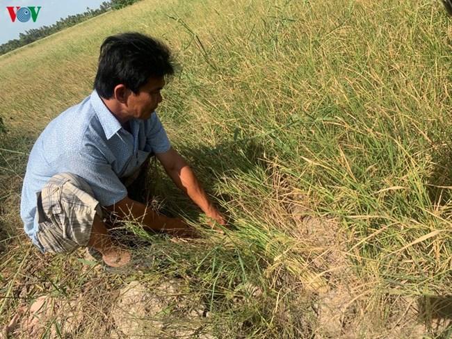 THỜI SỰ 12H TRƯA 22/2/2020: Các tỉnh Đồng bằng sông Cửu Long căng mình chống hạn, mặn xâm nhập